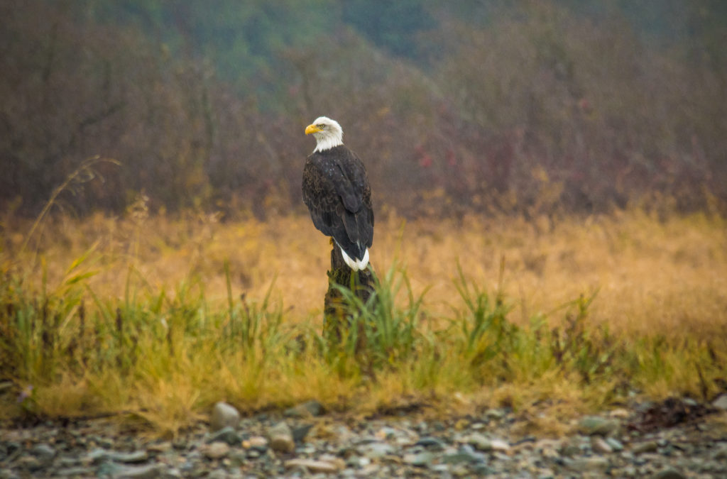 Viewing from Fraser River Safari